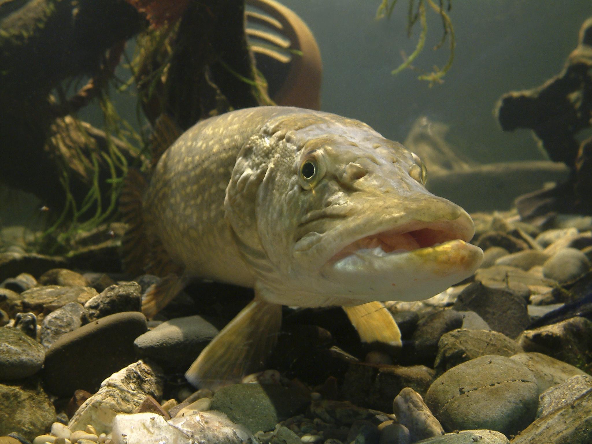 Etes vous prisonnier de vos croyances limitantes for Gros poisson aquarium