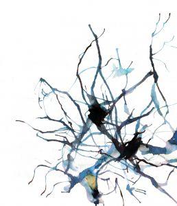 connexions nerveuses